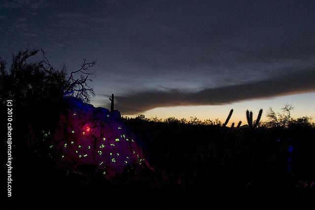 Click image for larger version.  Name:laser-rattlesnake-arroyo-01.jpg Views:22 Size:88.2 KB ID:22591