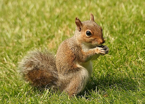 Click image for larger version.  Name:squirrel-5.jpg Views:2 Size:96.0 KB ID:18663